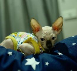 Kristの猫Pluto